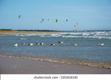 Seagulls and kite surfers on the ocean. Brittany. France