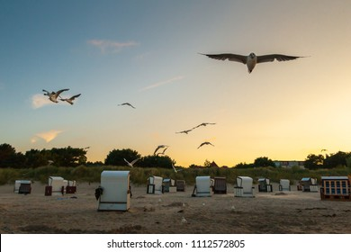 Seagulls (Laridae) flying in the sky over the Baltic Sea. Usedom Island. Selective focus and shallow depth of field.