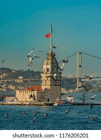 Seagulls and The Maiden's Tower and The Bosphorus Bridge on the background in Istanbul Turkey