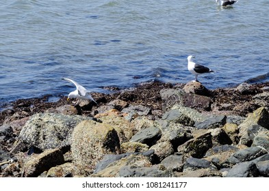 seagulls in the middle of some rocks