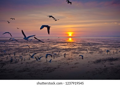 Seagulls migrate from Siberia, Mongolia, Tibet and China to Bang Pu, Samut Prakan Thailand.Bang Po Resort It is a popular holiday destination with one day or half day. Easy to travel.