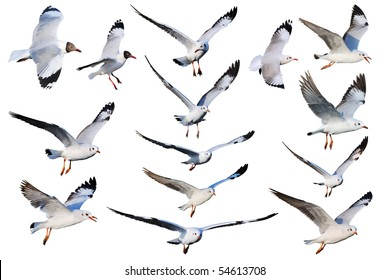 Seagulls mix
