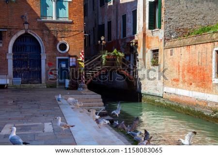 Seagulls Near Fish Market In Venice Italy