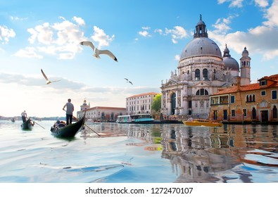 Seagulls and old cathedral of Santa Maria della Salute in Venice, Italy