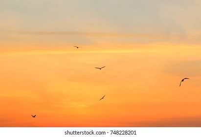 Seagulls on background of sunrise sky in Thailand.