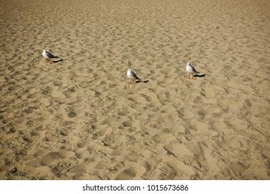 seagulls on the beach