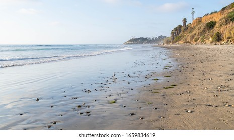 Seagulls on the beach after the waves washed away - Cardiff by the Sea, California on the Pacific Ocean