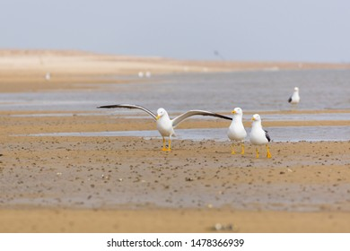 Seagulls on the beach of Amrum