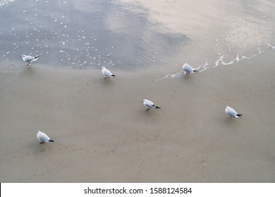 Seagulls on the beach of the Baltic Sea.