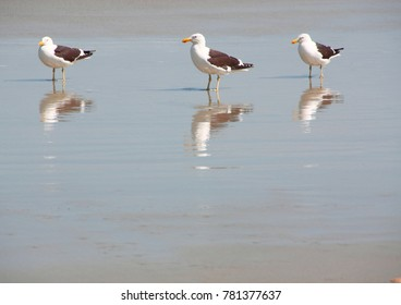 Seagulls on the beach reflecting in the water
