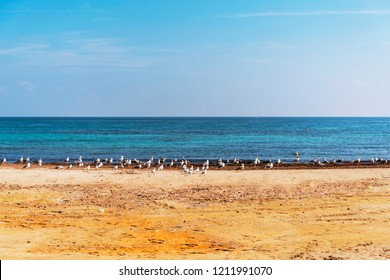 Seagulls on a beach of Savelletri near Fasano in Salento Italy