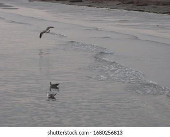seagulls on the beach seashore