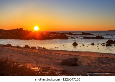 Seagulls on Castineira beach in San Vicente of O Grove at golden sunset