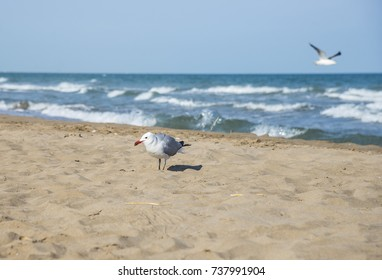 Seagulls on the coast of Mediterranean sea, El Trabucador