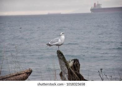 Bird Standing On Driftwood Images, Stock Photos & Vectors