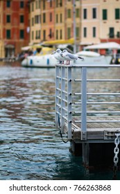 Seagulls on a floating dock in the golf of Portofino, Italy