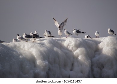 seagulls on ice sea