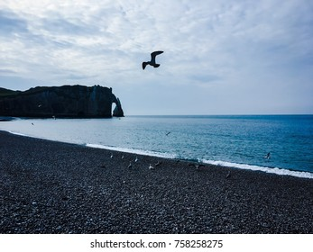 Seagulls on the main beach of Etretat in Normandy, France in early morning