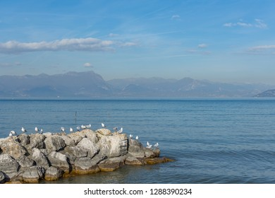 Seagulls on pebbles by the lake under a blue sky, horizontal landscape image