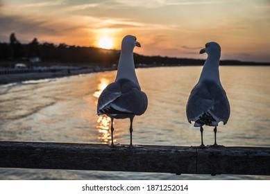Seagulls on the pier Binz at sunset - Shutterstock ID 1871252014