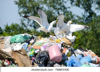 Seagulls  on the plastic in the dump rubbish