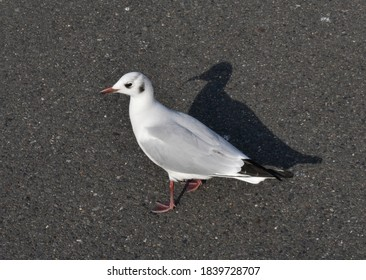 A seagulls on the road