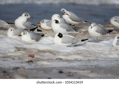 seagulls on sea photo in winter white