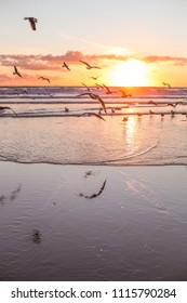 Seagulls on a sea, sunset light