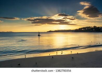 Seagulls on the shore of Silgar beach in Sanxenxo tourist city at golden sunset with sunbeams