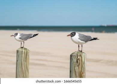 Seagulls on two posts at the Gulf of Mexico beach in Port Aransas, Texas on a sunny day, with the closer one in selective focus.