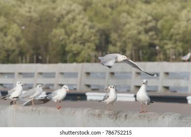 Seagulls perch on bridge rail (Cross process color)