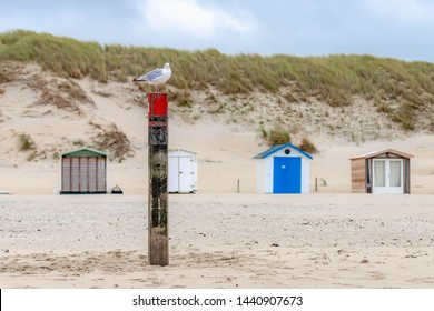 Seagulls perched in wooden poles with summer vacation houses or beach huts at Dutch north sea coast, Dunes or dyke and european marram grass as background, Netherlands.