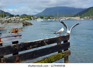 Seagulls perching on an old wooden jetty in Waikawa Bay, Marlborough Sounds, New Zealand