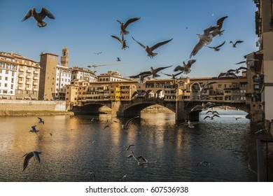 Seagulls and Ponte Vecchio, Florence