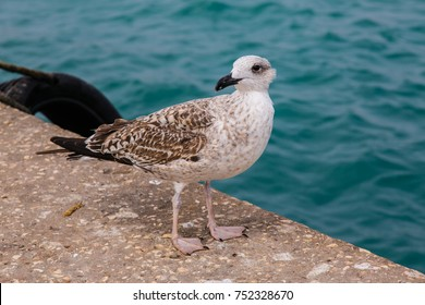 Seagulls in the port of Sagres. Southwest Atlantic coast of Portugal.