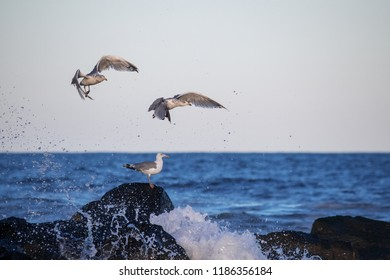 Seagulls quickly fly up to avoid the ocean spray off this jetty in Avon by the Sea in New Jersey.