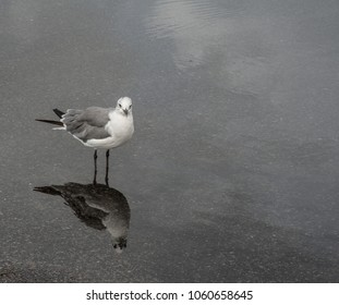 The Seagull's Reflection