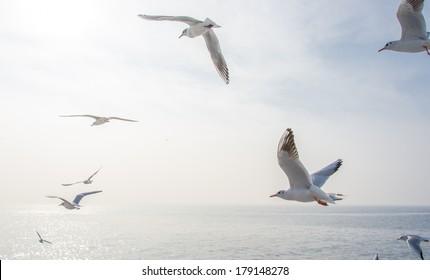Seagulls in the sea