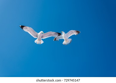 Seagulls at the sea