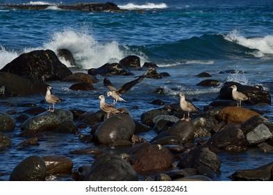 Seagulls in the seashore in low tide
