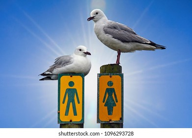 Seagulls and sex - We are all so different!