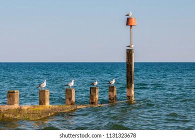 Seagulls sitting on the breakwater