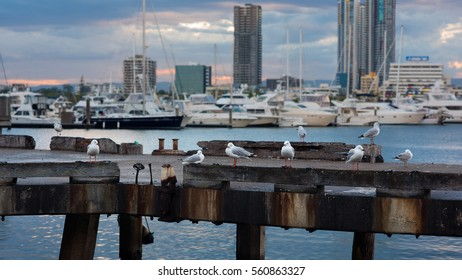Seagulls Sitting on a Jetty in a Marina with Boats in the Background During a Sunset, Main Beach, Gold Coast, Queensland, Australia
