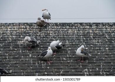 Seagulls sitting on the roof of a building leaving massive birds droppings