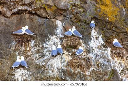 Seagull Nest Images, Stock Photos & Vectors | Shutterstock