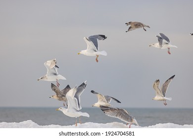 Seagulls in the sky over the sea with the waves and ice