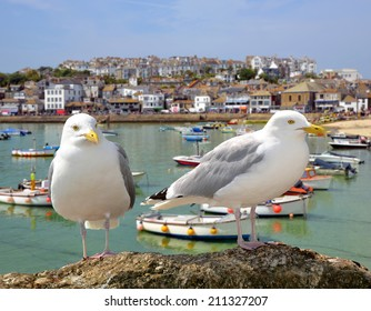 Seagulls in St Ives harbour Cornwall England UK