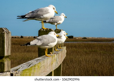Seagulls standing on a fence