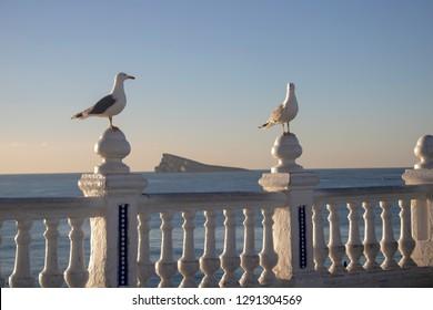 Seagulls standing on a wall with the Mirador de la Isla de Benidorm taken at the Mirador de Punta Canfali in Benidorm Alicante in Spain