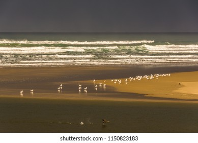 Seagulls in sunlight on the beach with a dark stormy sky above at Cannon Beach, Oregon. In the foreground a double-crested cormorant (Phalacrocorax auritus) takes flight from Ecola Creek.